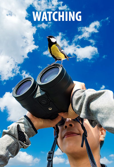 Bird Watching Adjara